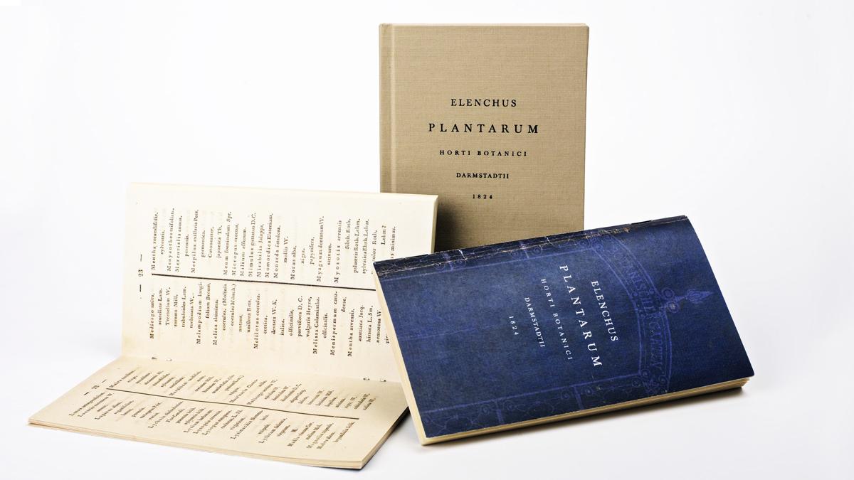 Plantarum